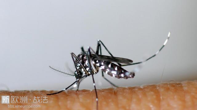 """""""毒蚊""""来袭!叮咬致病毒性疾病重返法国"""