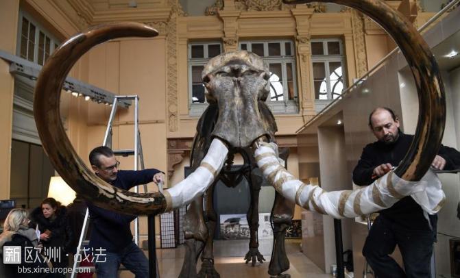 法国将拍卖冰河时期猛犸象骨架,距今1万5千年